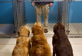 in dog cage